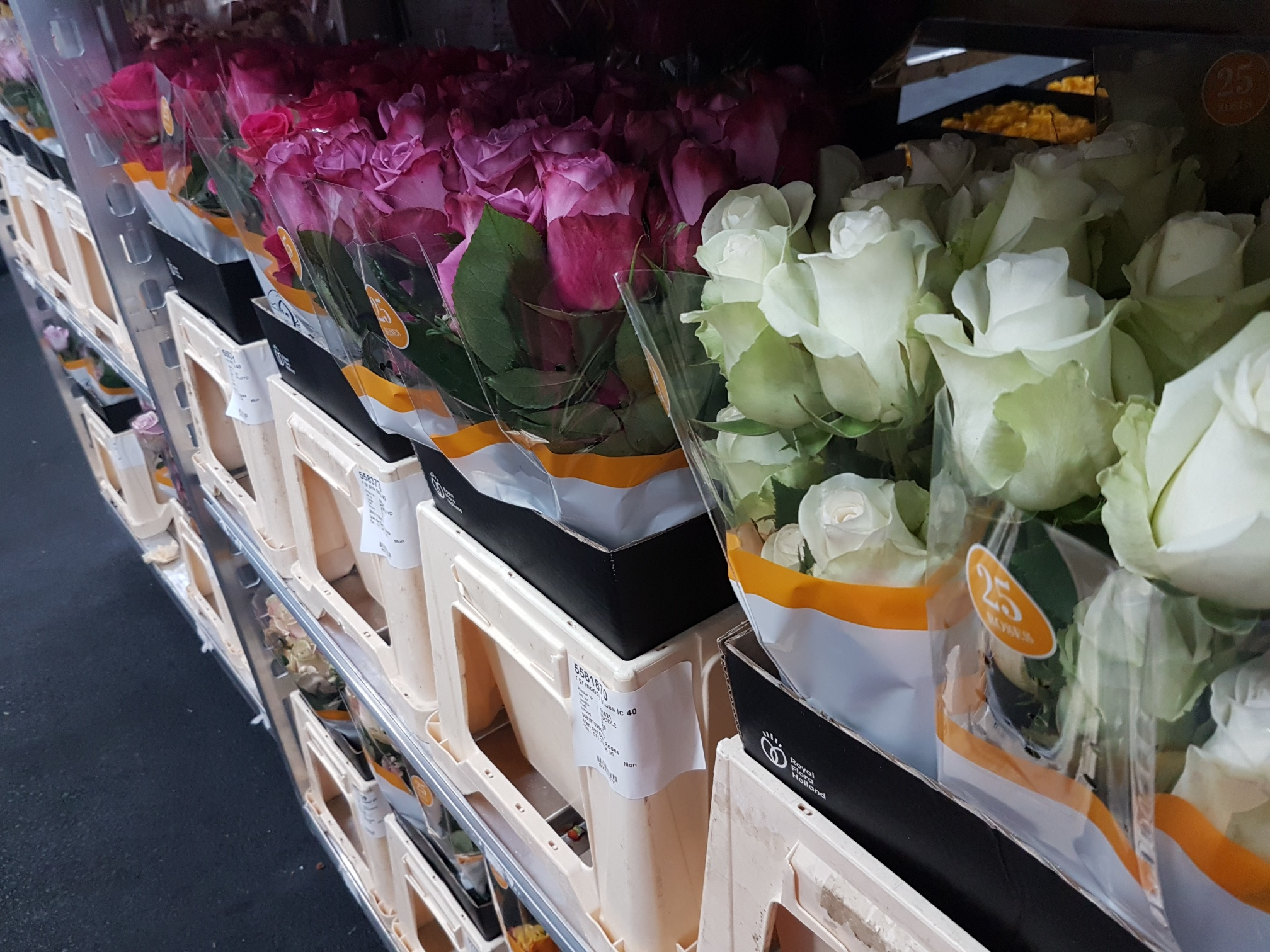 van der deijl roses assortiment ecuador rozen