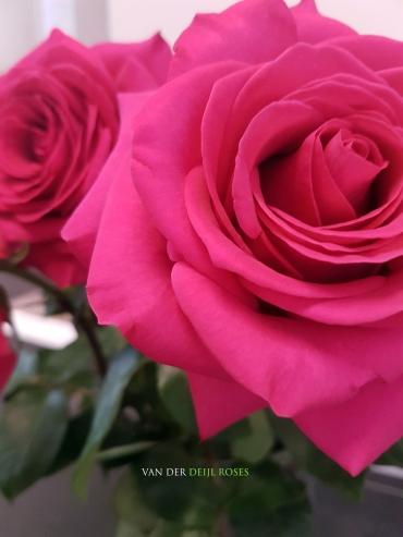Roze is voor meisjes!