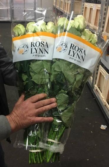 Rosalynn: beeldschone roos